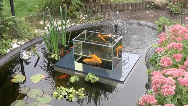 Floating fish koi pond observatory lets you view your fish for Poisson nettoyeur pour bassin exterieur