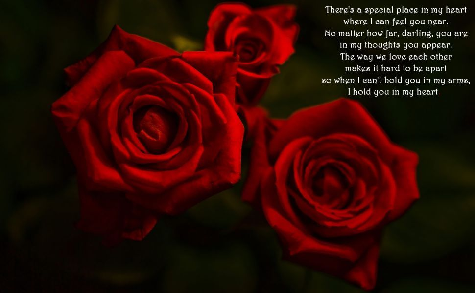 Romantic poem and red roses HD Wallpaper | Wallpapers ...
