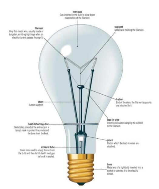 What\'s in a light bulb? | #YOUOWNIT | Pinterest | Light bulb, Bulbs ...