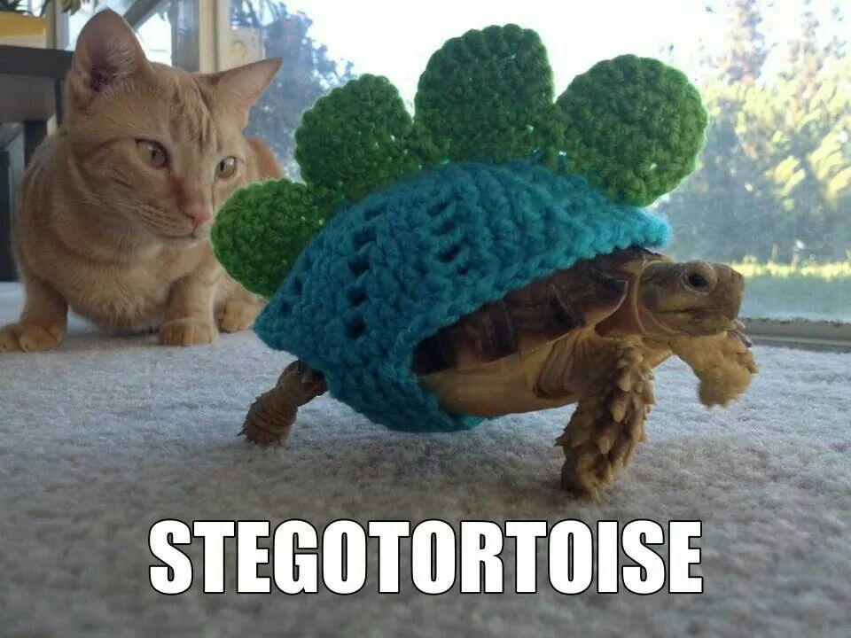 Stegotortoise