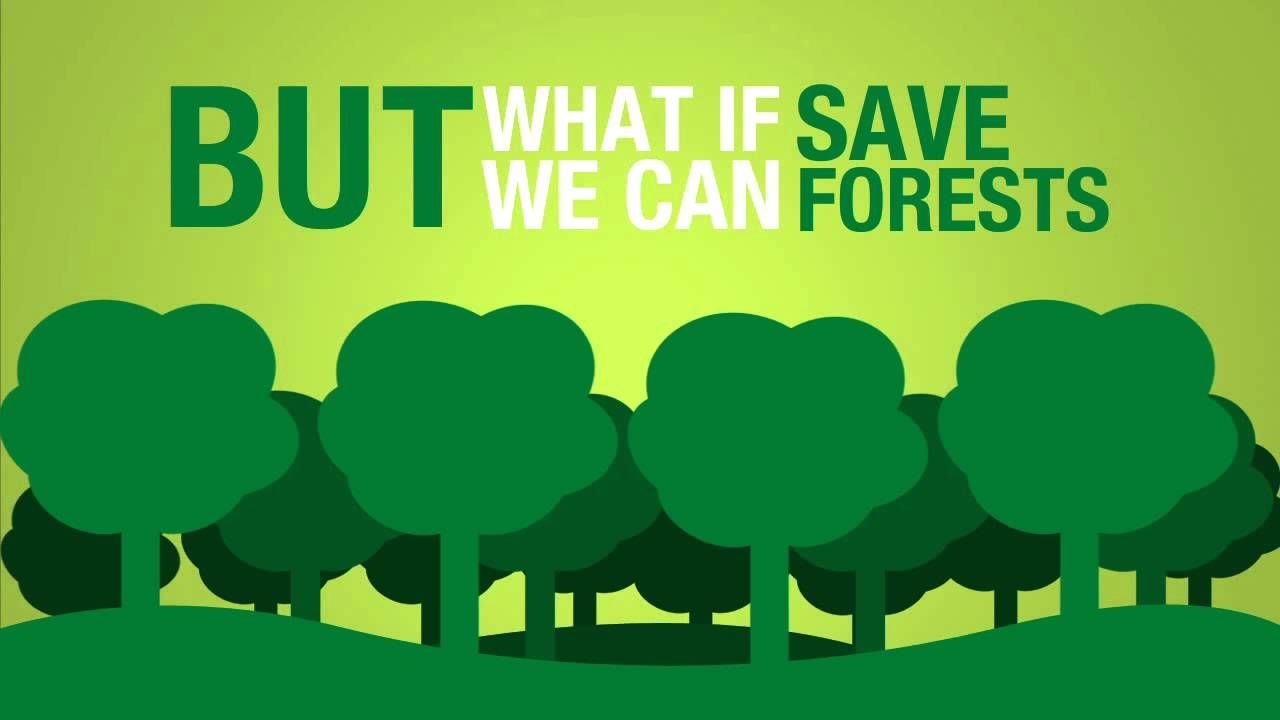 Save Paper To Save Forests Save Trees Forest And Wildlife Forest