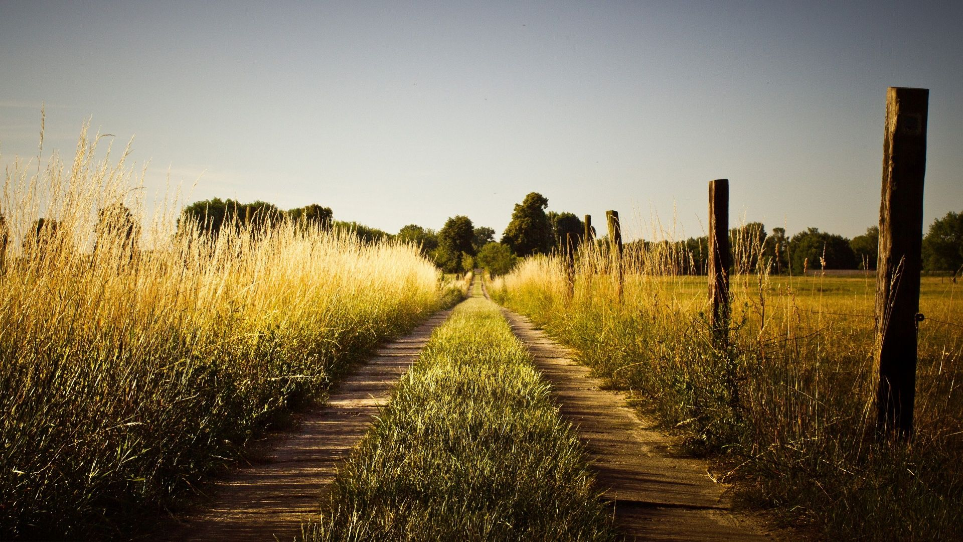summer country road wallpaper in