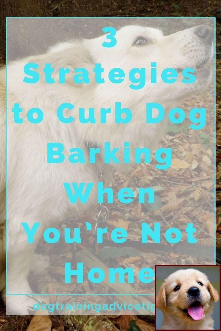 Dog Behavior List And Dog Training Classes Petco Cost Dog
