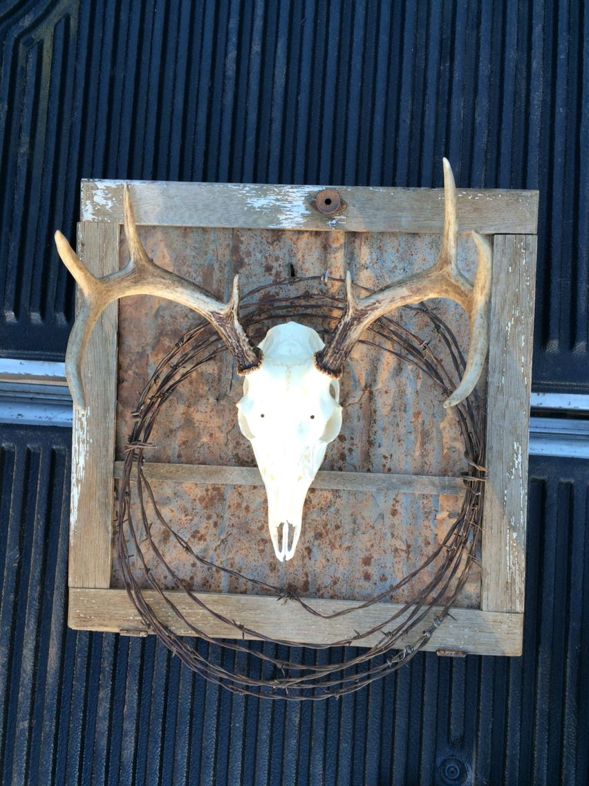 Deer skull mount ideas - My First European Skull Mount I Did Of My First White Tail Buck Killed With A