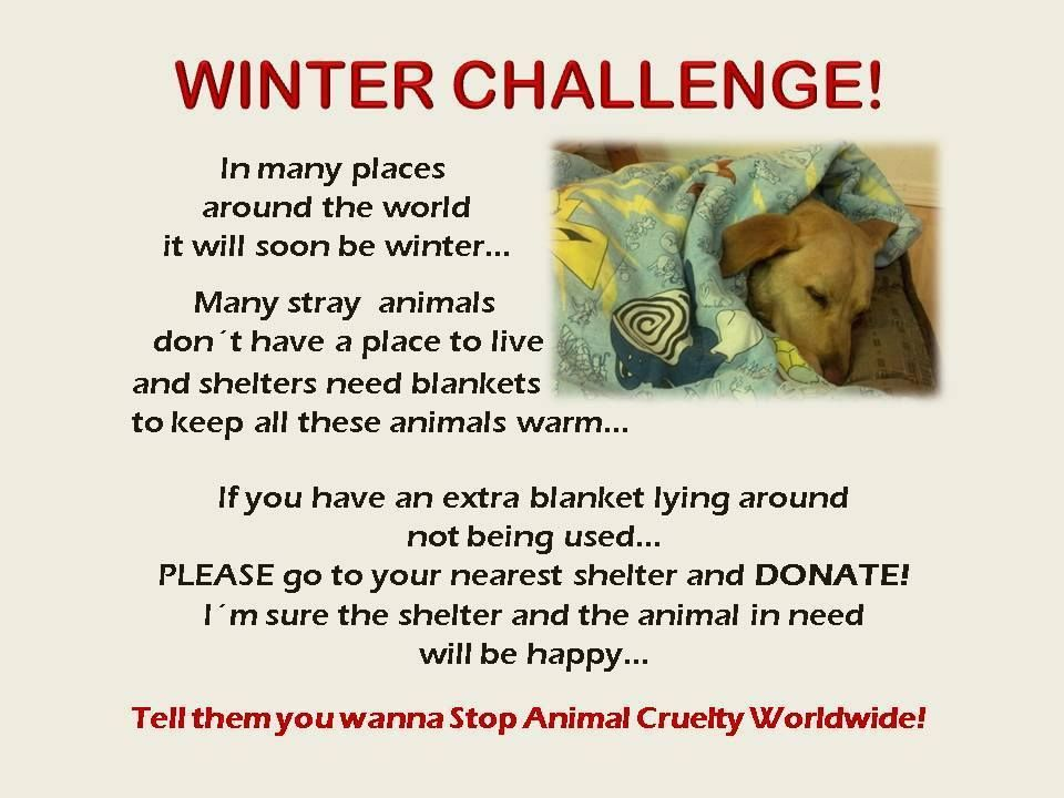Donate Blankets To Your Local Shelter Animal Quotes Animals Shelter Design