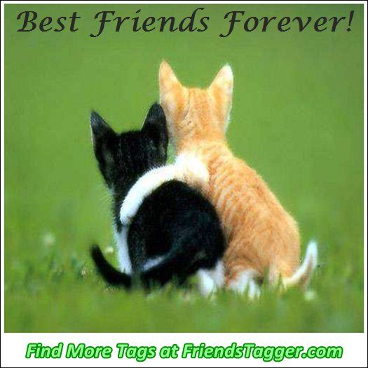 Friendship Quotes Cats: Tag Your Friends As Best Friends Forever #3 On Facebook