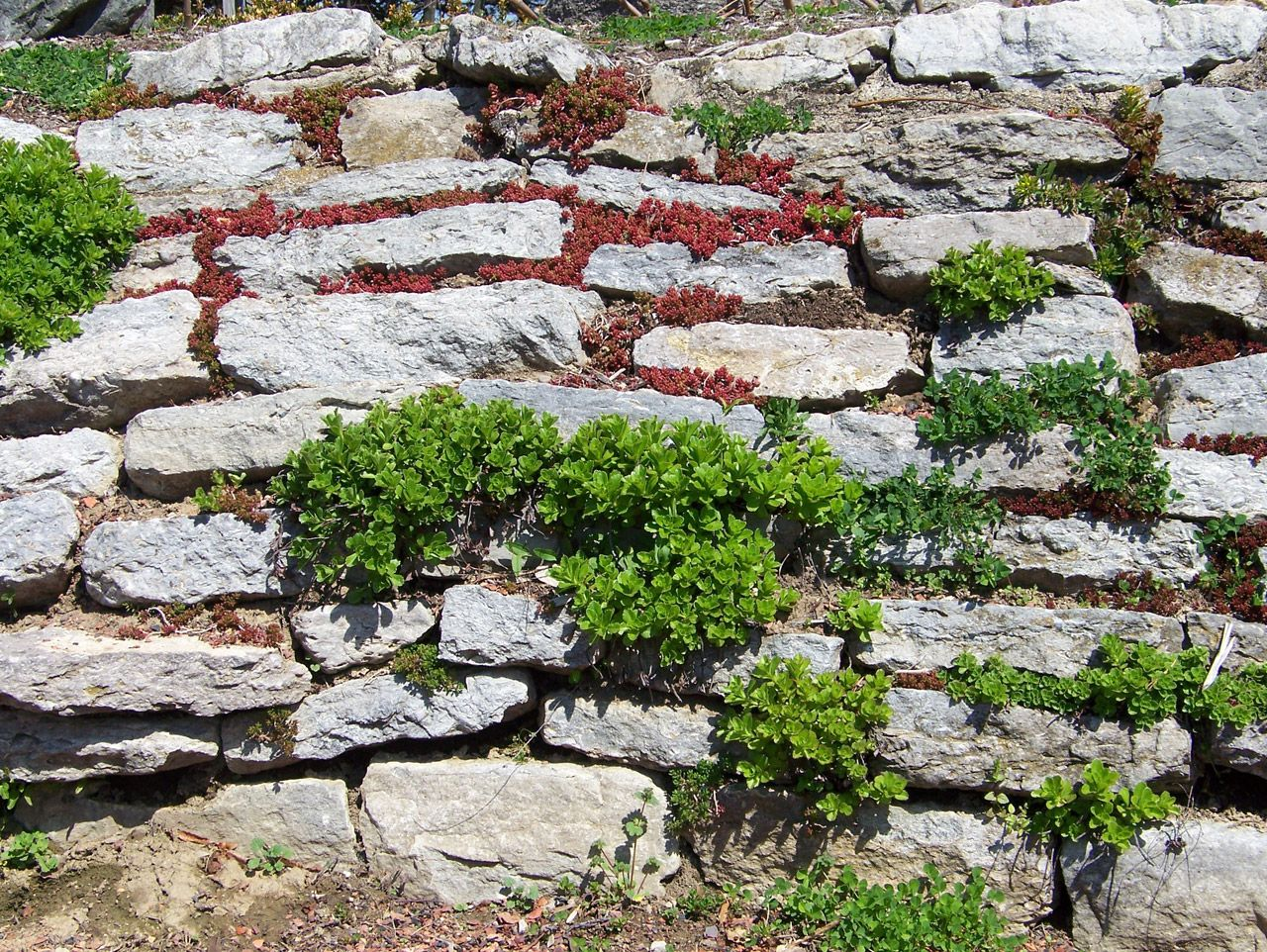 Stone Wall Plants In A Free Stock Photo Hd Public Domain Pictures