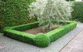 Box Hedging Google Search Ideal Gardens Garden Improvement Box Hedging