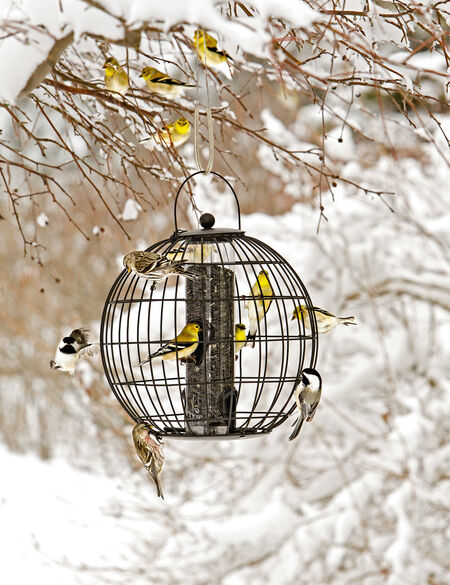 Bird Feeder Cage: Mixed Seed Globe Cage Feeder | Gardeners.com