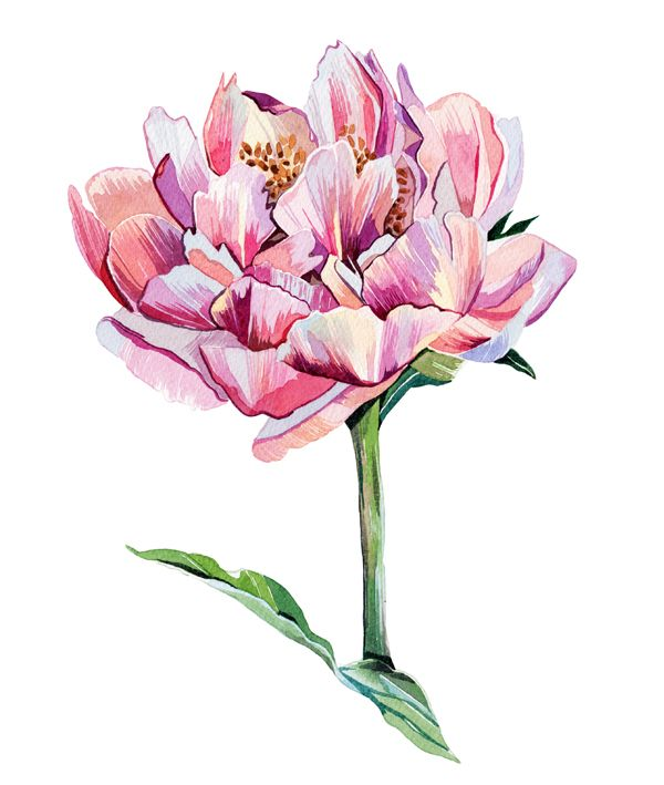 Holly exley illustration watercolour flower illustrations a peony holly exley illustration watercolour flower illustrations a peony and a dahlia mightylinksfo