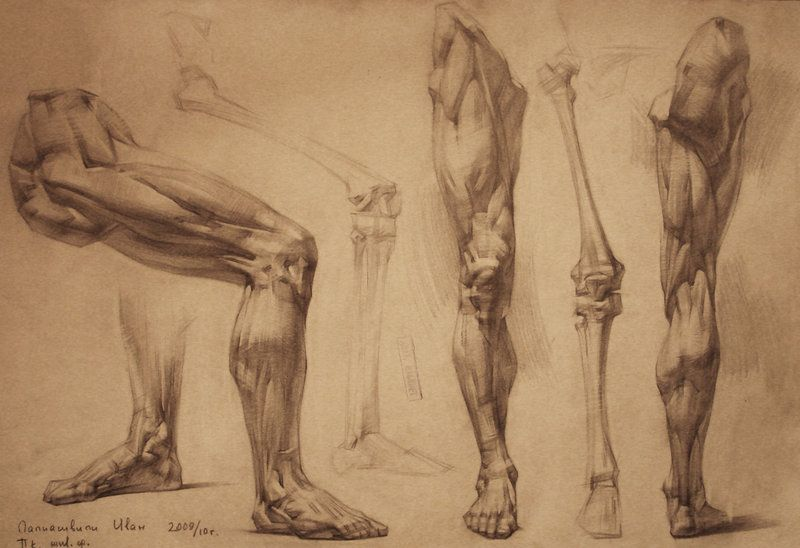 Human Anatomy 30 By Ivany86 On Deviantart Via Pincg Tutorials