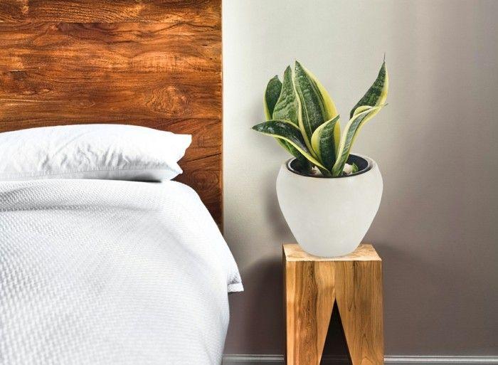 Zimmerpflanzen Schlafzimmer ~ Gruene zimmerpflanzen heilkraeeuter gruenlilie schlafzimmer