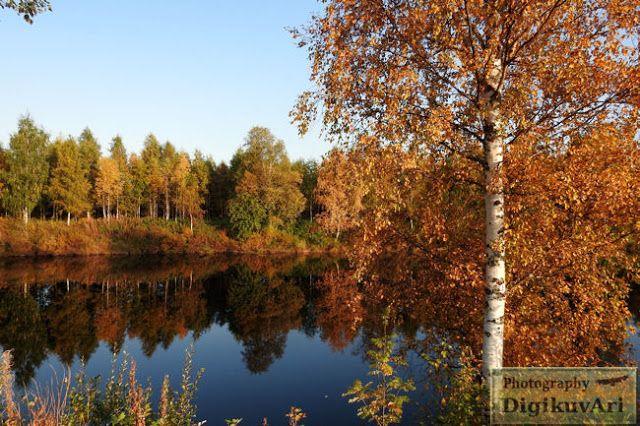 Pohjoishaara Pyhäjoki syksy