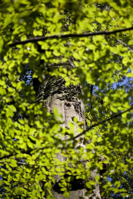Beech Forests in the Spessart Mountains.  Photographer: Oliver Soulas / Greenpeace