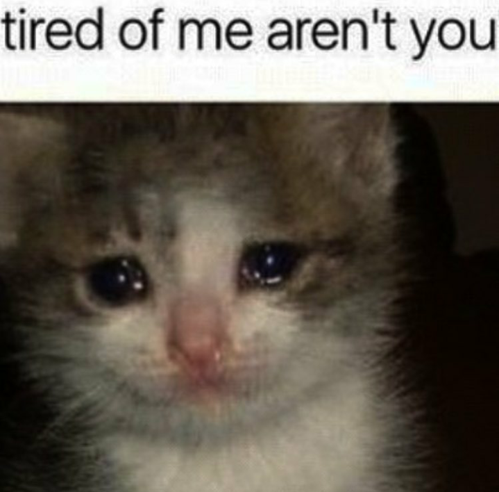 50 Of The Most Loved Doggo Memes Of 2018 Will Make Your Heart Feel Complete Funny Relatable Memes Funny Animal Memes Stupid Funny Memes