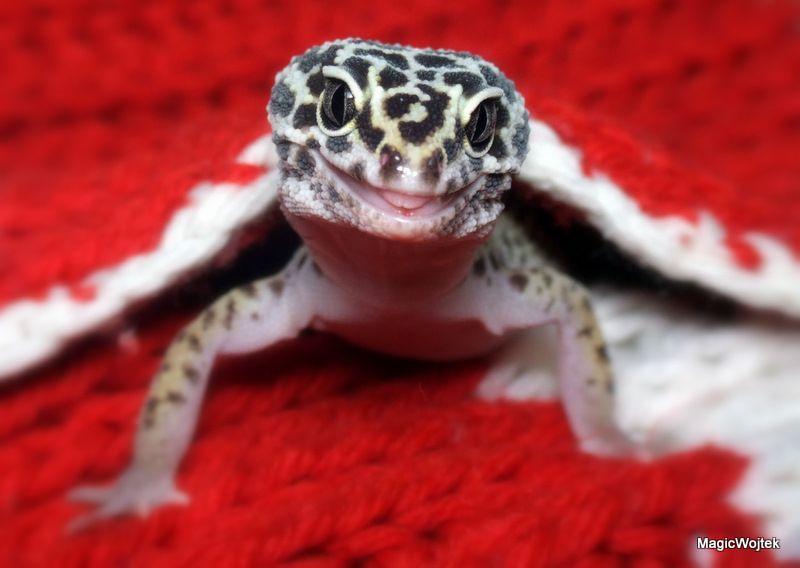 Leopard Gecko Help!!?
