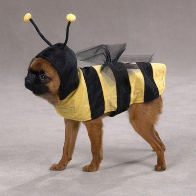 Casual Canine Honey Bee Dog Pet Halloween Costume XS S M L XL