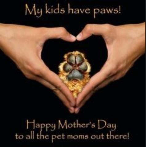 Pin By Jessanae Artist Crafter Mua On Animals Pet Mom Fur Baby Mom Happy Mothers Day