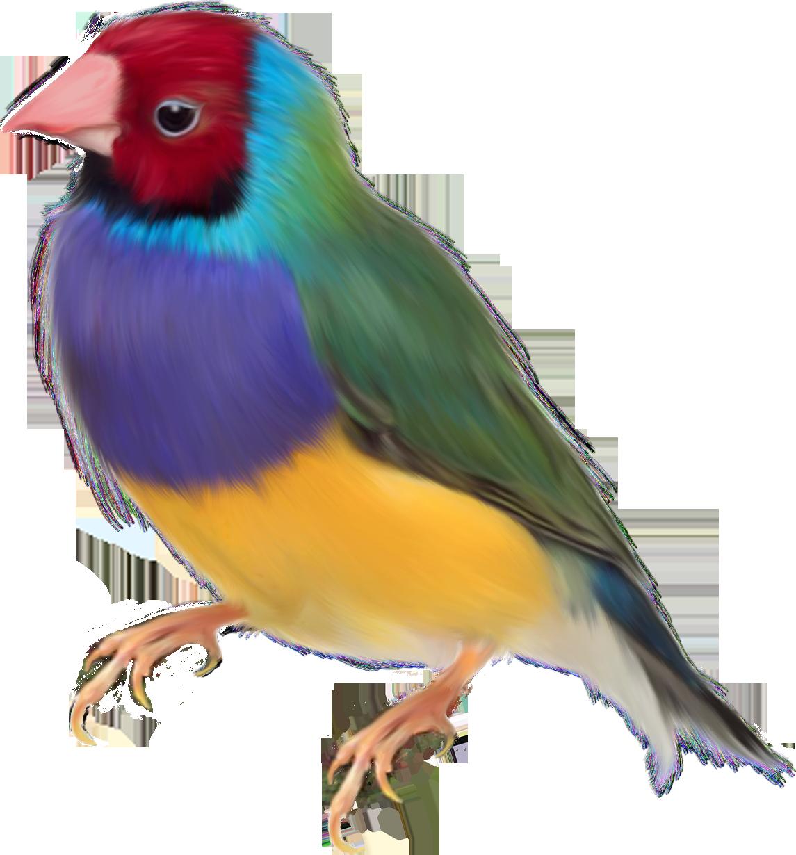 Render Oiseaux - Renders Diamant de Gould oiseau exotique | oiseau ...