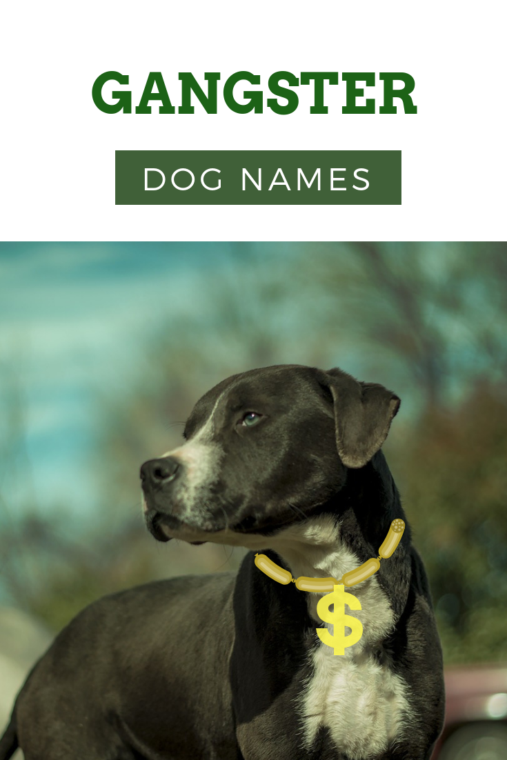 Gangster Dog Names that Will Make Your Dog Even More Badass