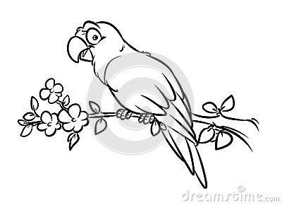 Parrot Coloring Pages Cartoon Illustration Bird Tree Branch