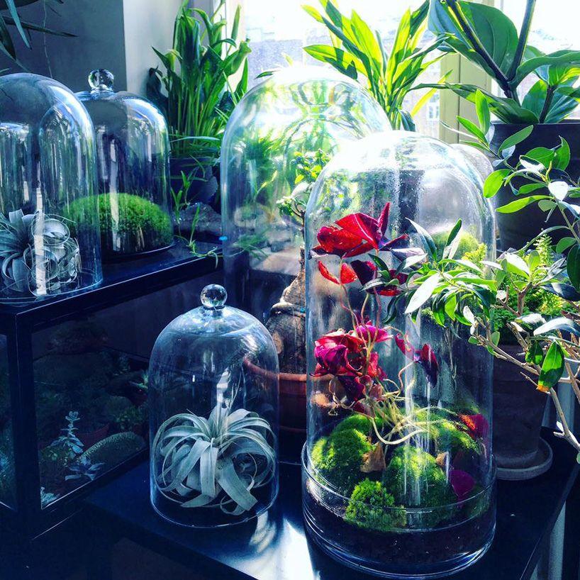 Egzotyczne Kwiaty Hodowane W Sloikach Glass Glass Vase Vase
