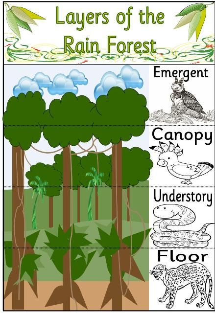 Rain Forest Amazon Rainforest Classroom Rainforest Activities