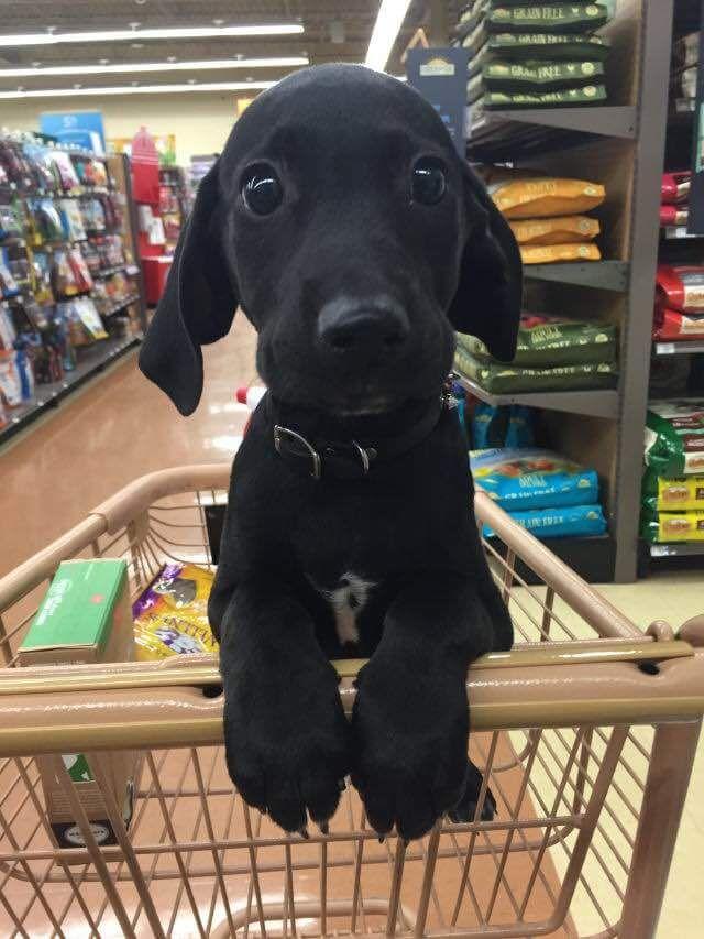 """Can we pleeeeease buy treats?"" http://ift.tt/2bvgjP9"