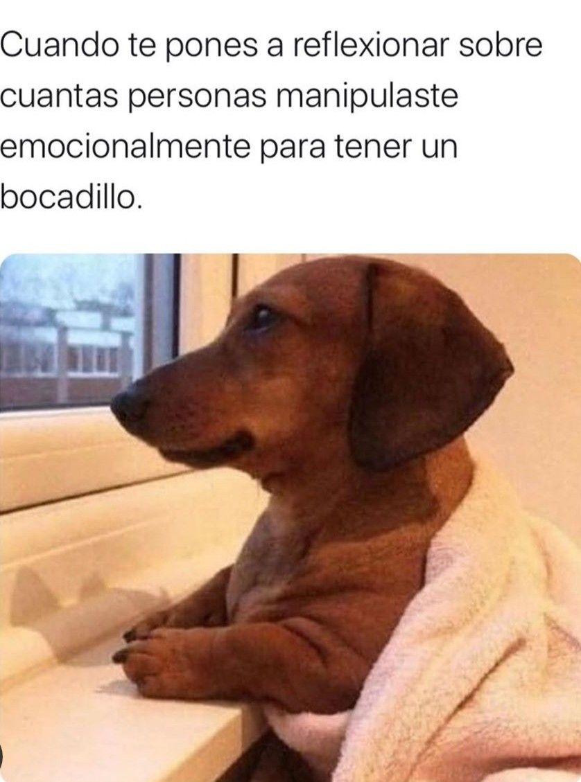 Pin De Anto En Memes Y Frases Uwu Fotos De Animales Animales Y Mascotas Perros
