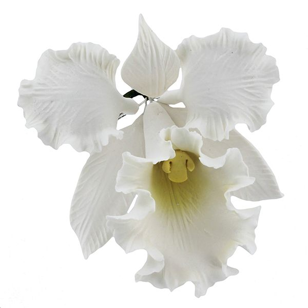 Cattleya Orchid White Large 12 Count By Chef Alan Tetreault Orchids By Chef Alan Tetreault Cattleya Orchid Orchids Cattleya