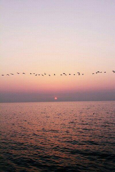 Mar aves sea sun sol