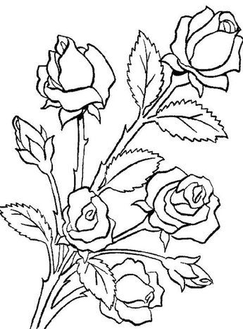 Flower Bouquet Flower Bouquet Is Made Of Roses Coloring Page Rose Coloring Pages Flower Coloring Pages Roses Drawing