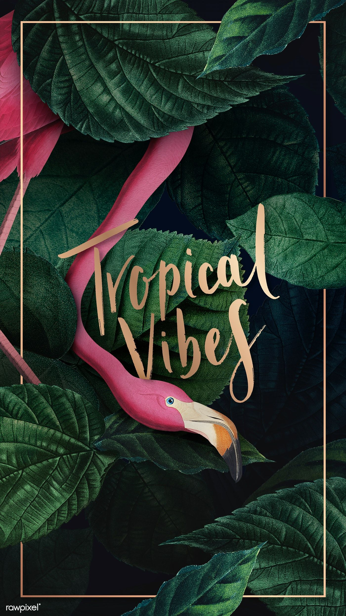 Download premium illustration of Tropical flamingo on a