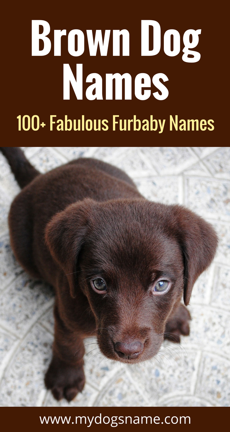 Fabulous Dog Names For Your Brown Furbaby These Brown Dog Names Are Perfect If You Have A Dog With All Brown Fur Or E Brown Dog Names Dog Names Girl Dog