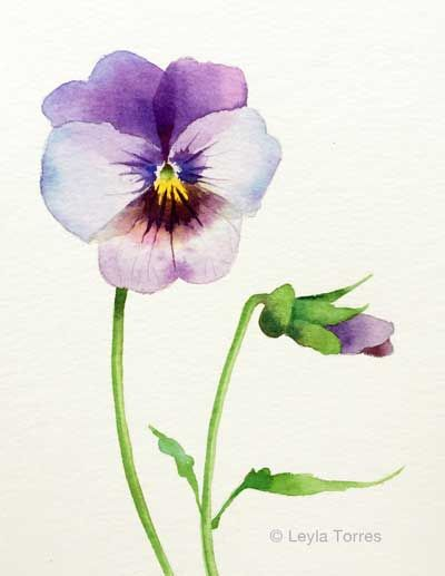 Painting A Pansy In Watercolor Post Image Art Flowers Watercolor Pansy Watercolor Pansies Watercolor Flowers Watercolor Flowers Paintings Flower Art Painting