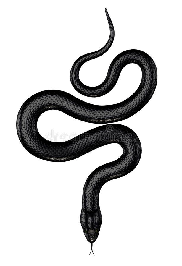 Black Snake stock illustration. Illustration of reptile - 50938478