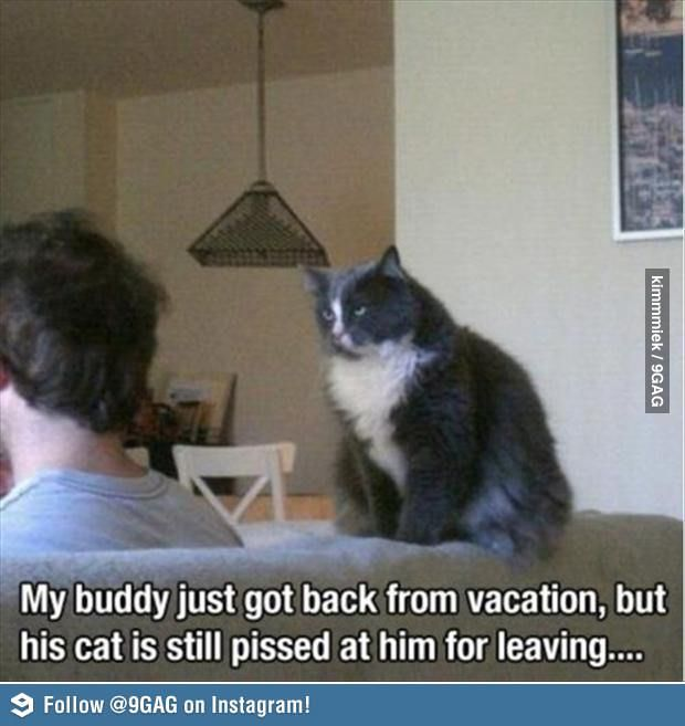Never leave your cat alone