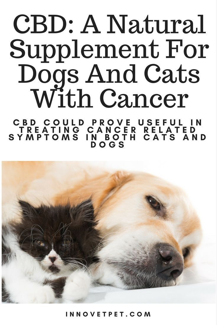 Good News For Your Pets With Cancer Scheduled Via Http Www Tailwindapp Com Utm Source Pinterest Utm Medium Twpin Cat Illnesses Dogs Pet Oral Care