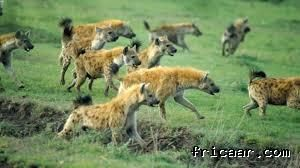 Kenya Tanzania Safari Combinations Days Nairobi Area - 9 things to see and do in serengeti national park