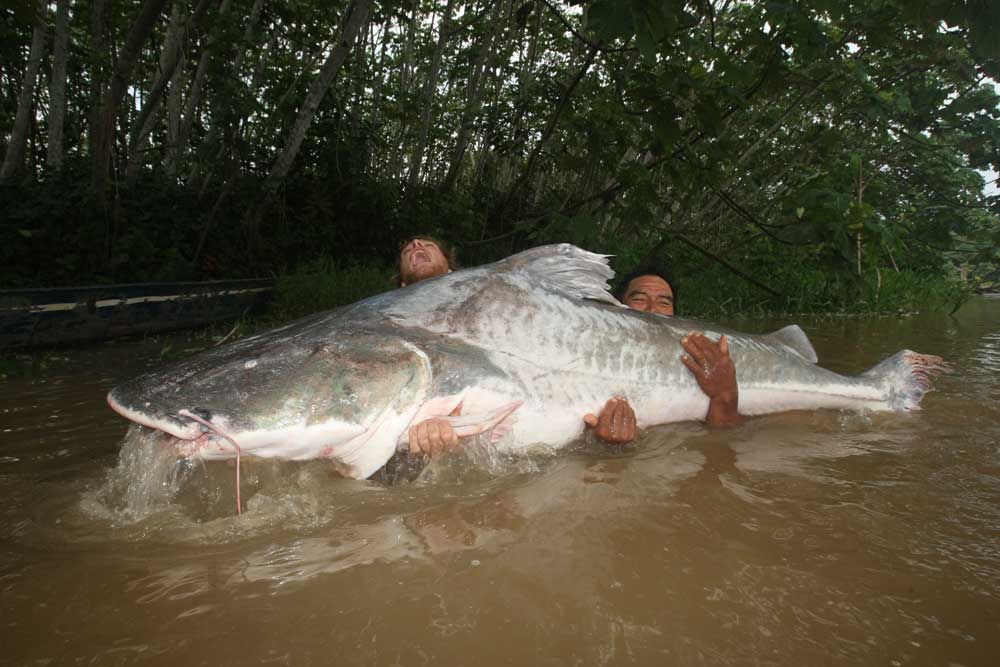 10 Biggest Catfish World Records Of All Time Game Fish Big Catfish Catfish Monster Fishing