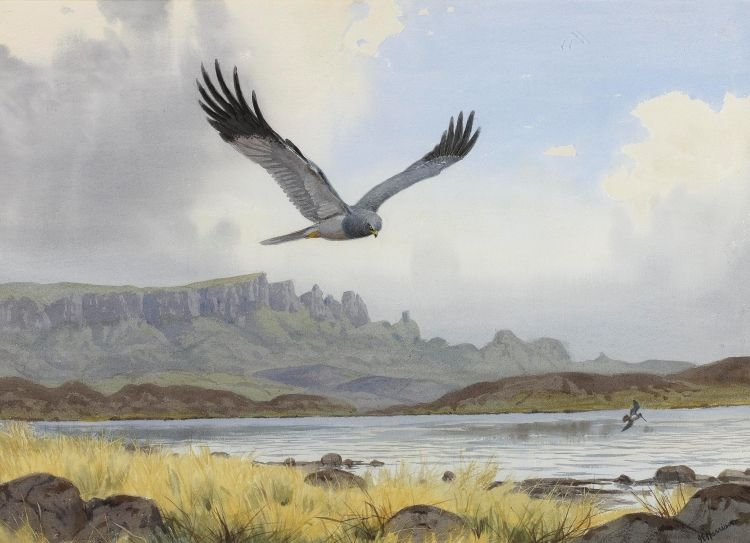 Best Rountree Tryon Harrison Snipe Painting Животные Фон 400 x 300