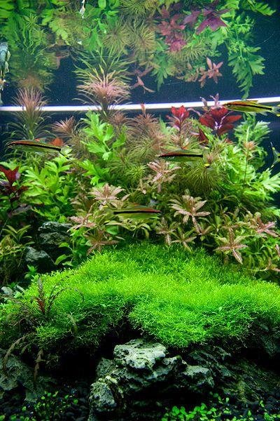 Oliver Knott | Planted aquarium, Aquascape, Water plants