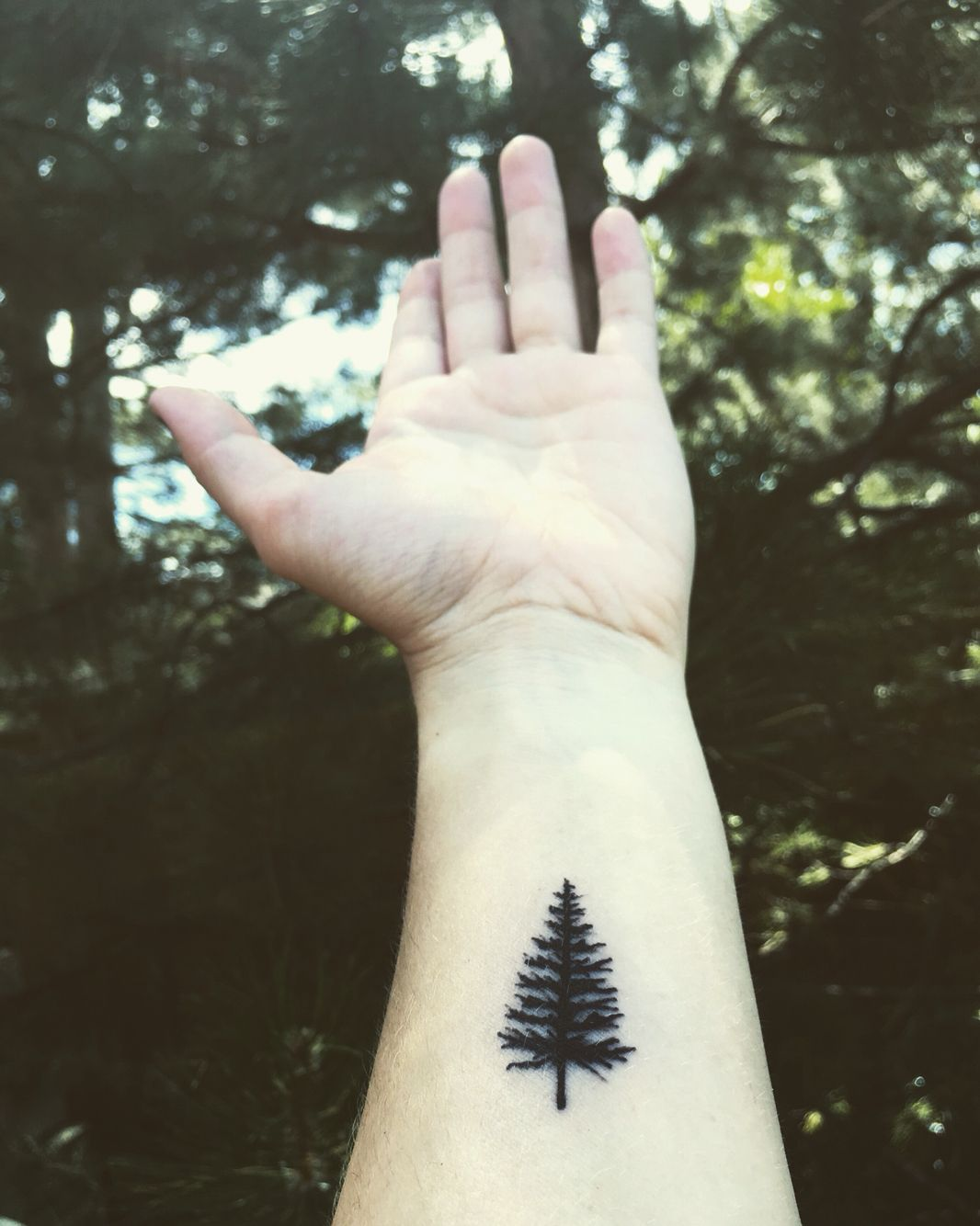 My First Tattoo Pinetree Small Black Wrist Tree Tattoo Small Tree Sleeve Tattoo Small Black Tattoos