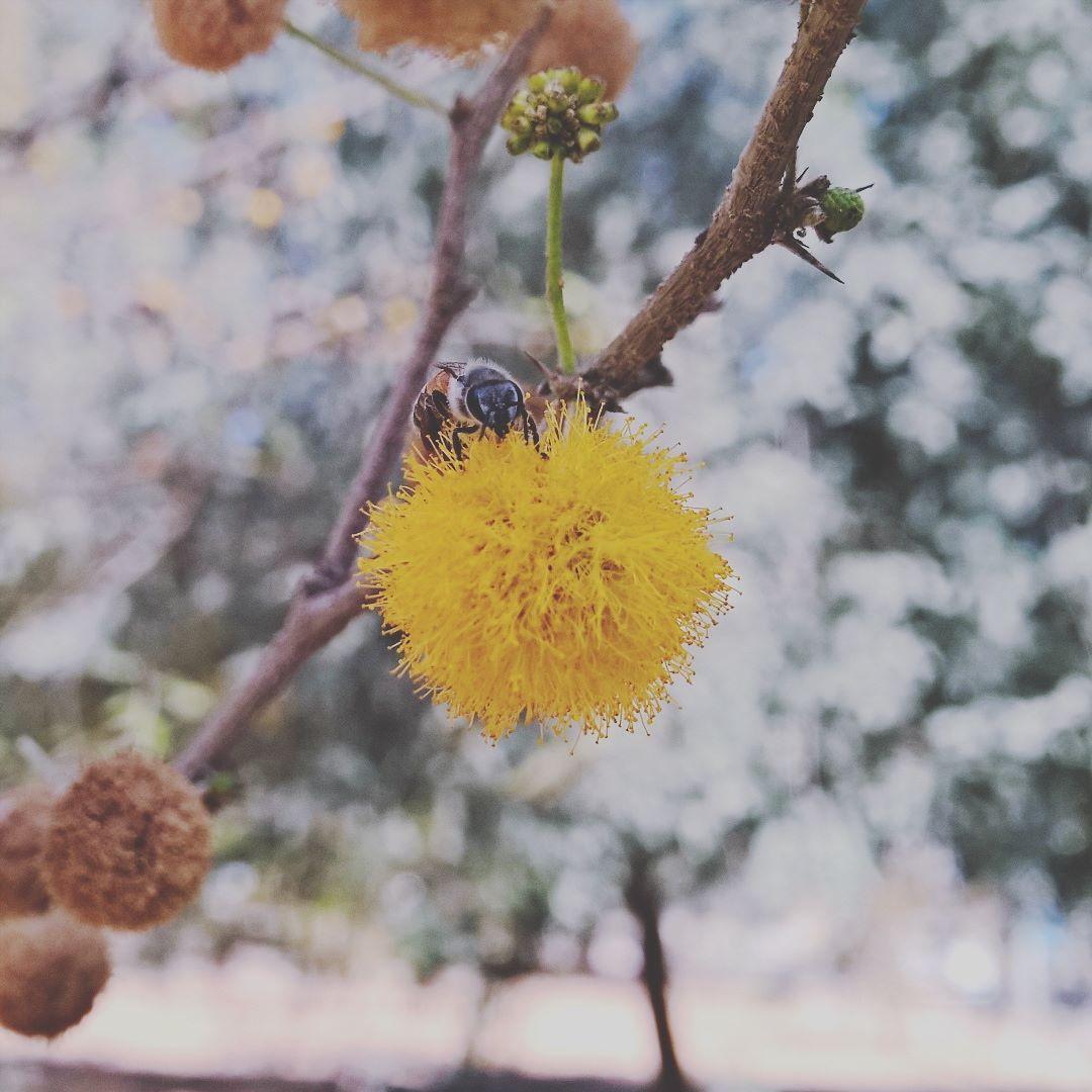 مصروف ذندگی #lowlightphotography #windowsphonephotography #windowsphone #morelumialove #switchtolumia #myuae #myabudhabi #uae #lumia1520 #shotonmylumia #lumiagram #lumiagraphy #flowers #macroporn #macrophotography #macro_perfection #macrogardener #honeybee #macro_x #macro_captures  @lumiavoices @microsoftlumia by ___amwae___