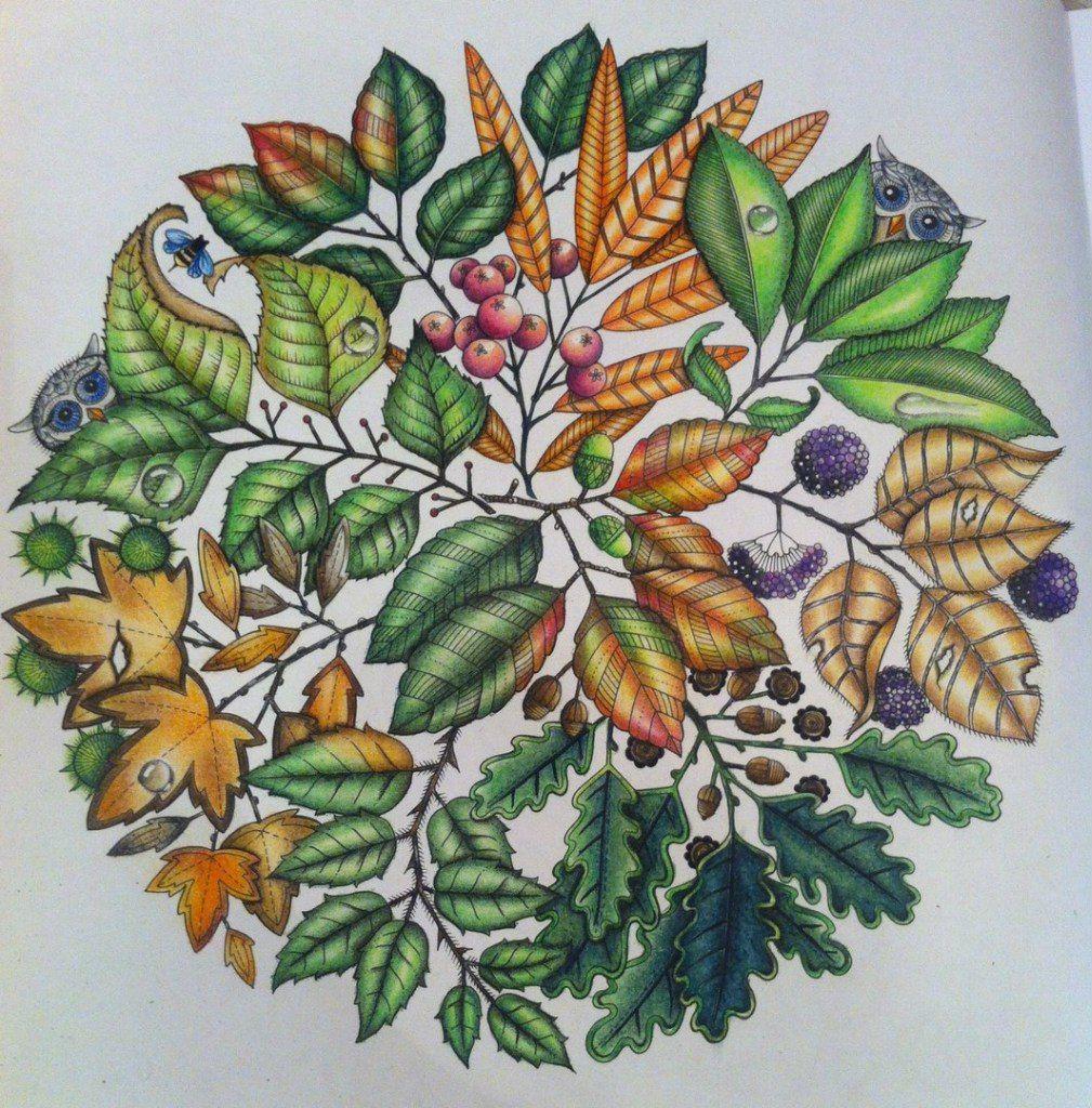 Раскраски | Зачарованный лес | Таинственный сад (с ...