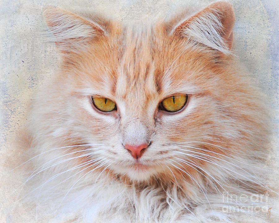 Orange tabby cat maravillas del mundo animal pinterest for Gato de carpintero