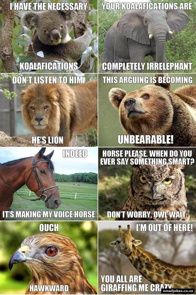 Animal Sayings