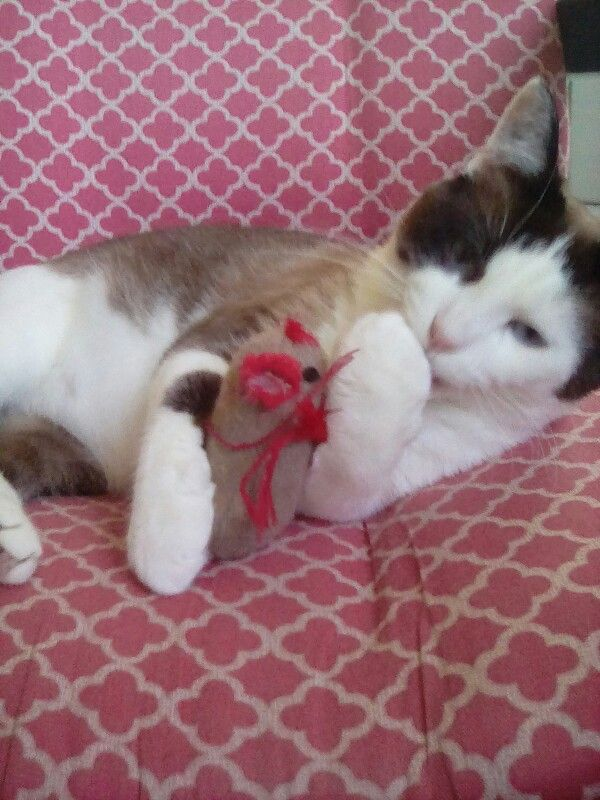 So cute!! He's cuddling with his toy!!