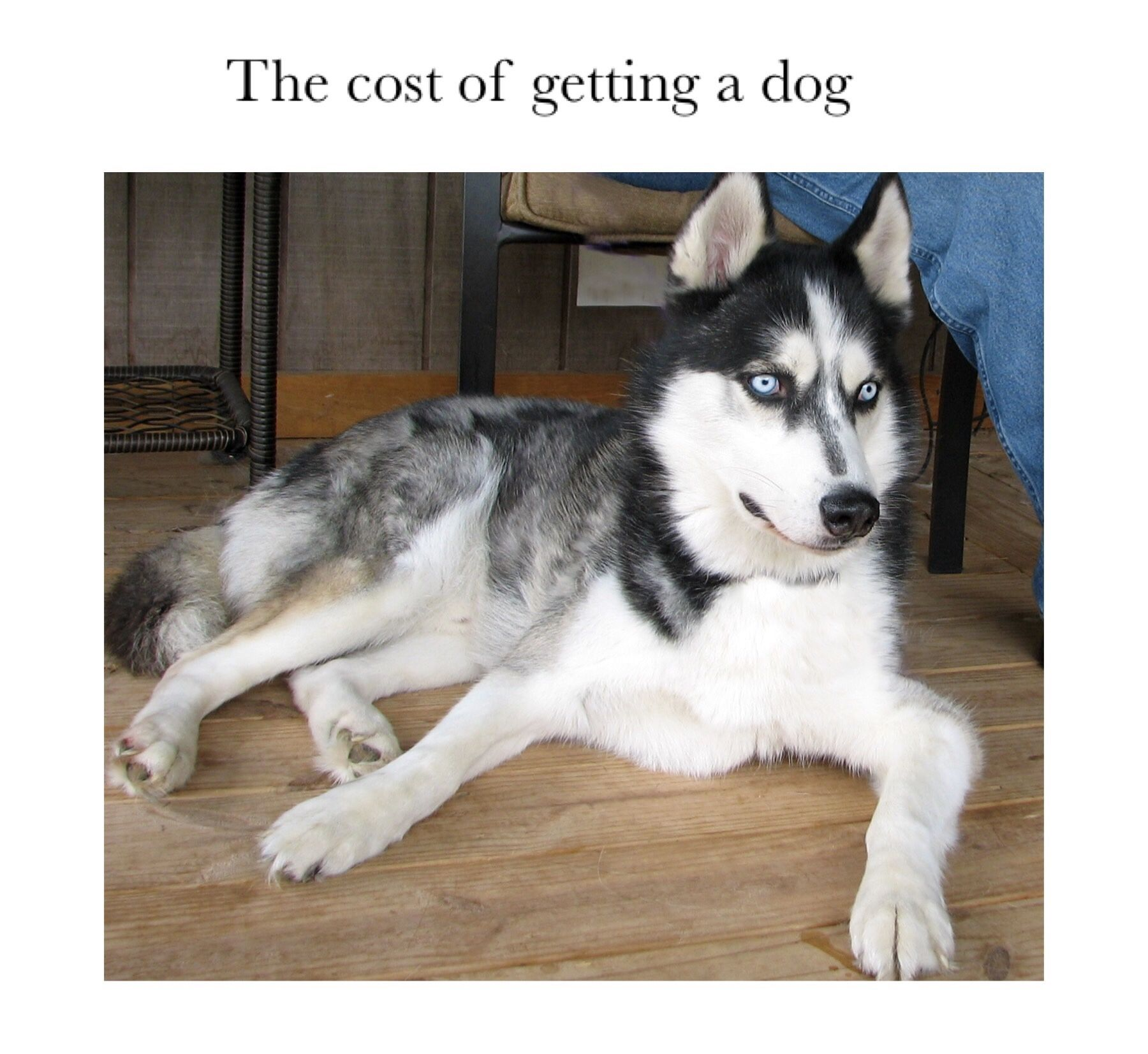 Blog Post Cost Of Owning A Dog Https Pawsomedoginfo Wordpress