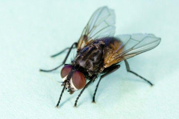 Ungezieferbekämpfung: Die 10 schlimmsten Plagegeister   Fliegen ...